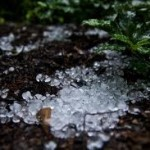 Hail damages crop in Andhra Pradesh