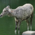 animals in zoo in summer season