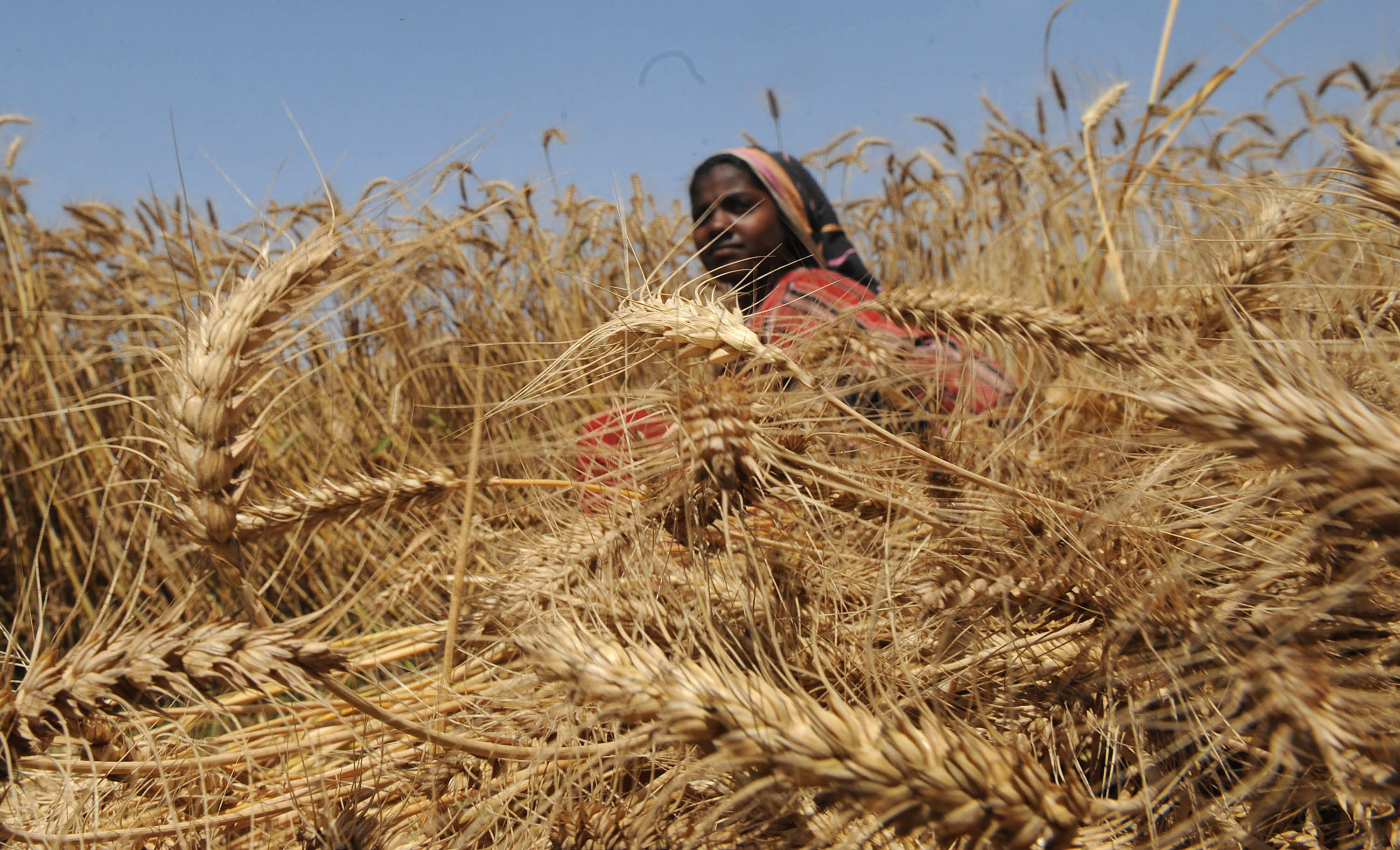Climate change affecting Indian agriculture | Skymet Weather Services