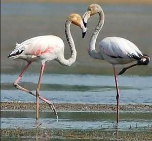 migratory birds in India