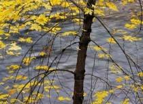 Fall season in USA