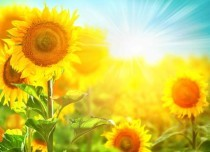5 Health benefits of Spring season