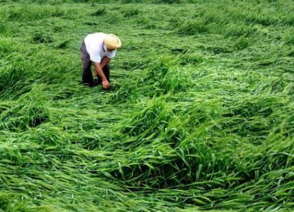 crop damage relief limit