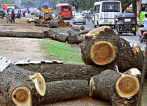 Ghaziabad Highway Widening Trees Axed