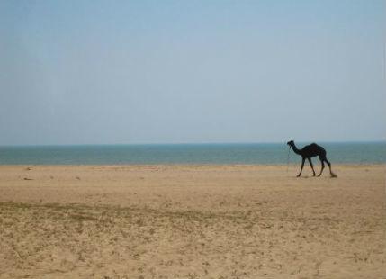 Summers in Gujarat