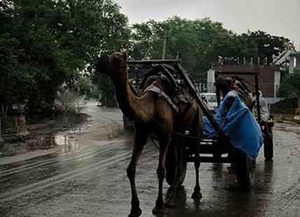 Monsoon Rain In Rajasthan 2015