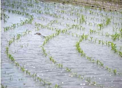 Rain in Vidarbha