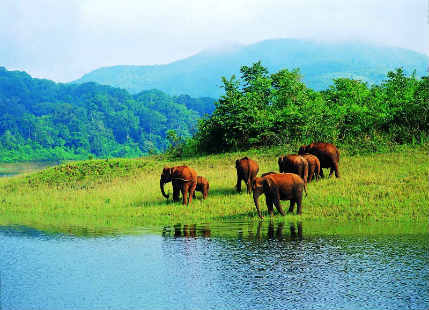 Things to do in Thekkady