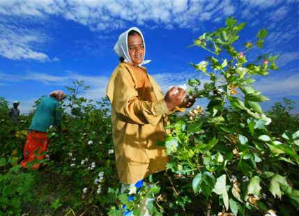Women Farmers In Punjab Haryana Fight Whitefly Attacks