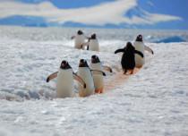 Sanctuaries in Antarctica