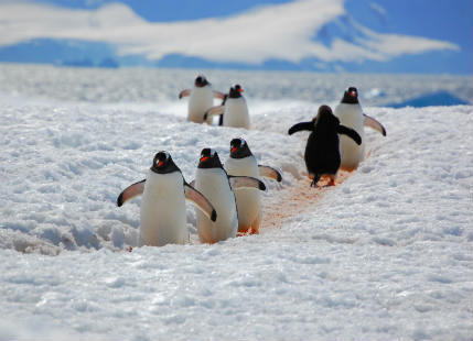 Sanctuaries in Antarctica