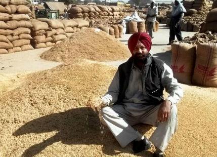 Punjab_basmat