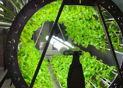 After growing plants in Space, NASA might grow some on the red planet
