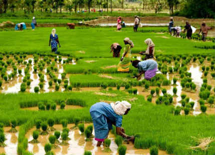 Agriculture in India_Monsoon 2017