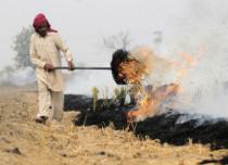 Burning paddy