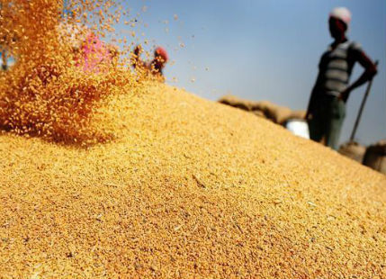 Wheat production in India