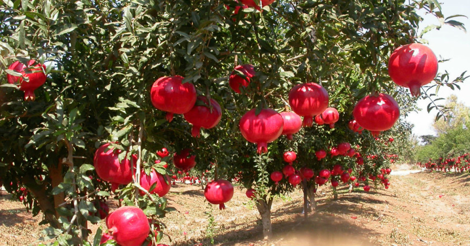 Maharashtra crop