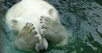 fb global warming