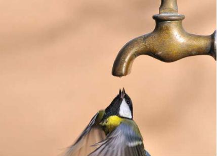 severe-heat-bird-thirsty