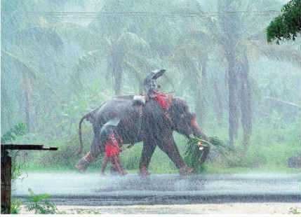 rain-in-kerala