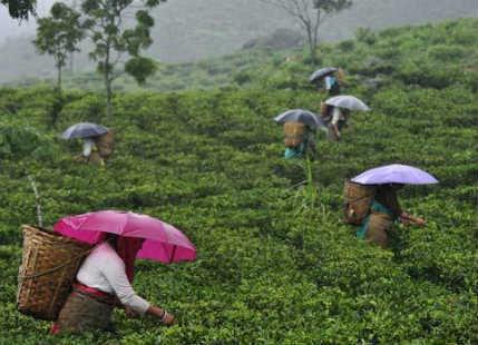 Northeast India rain deficiency