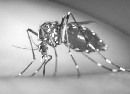 Deadly dengue claims ten lives in West Bengal | Skymet Weather Services