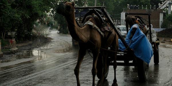Rajasthan-rains1