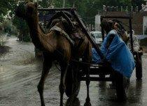 Rajasthan-rains2