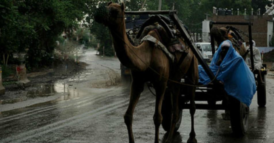 Rajasthan-rains3