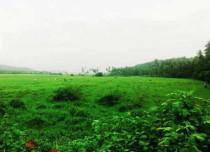 Vidarbha Rains 2