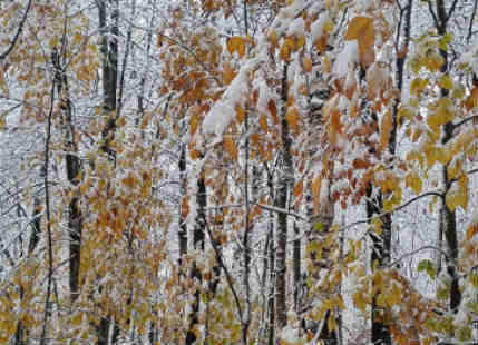 Northeast United States witnesses first batch of snow