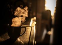 Delhi Coffee Places - 2