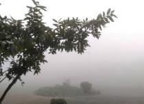 Delhi fog_Dev 429