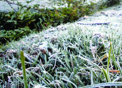 Frost In north India_