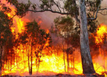 Ecosystems destroyed in Australia due to extreme weather in 2016