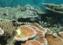 Great Barrier Reef under threat due to coal dust leak