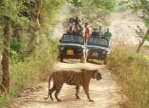 Madhya-Pradesh-Bandhavgarh-National-Park_Styles at life 429