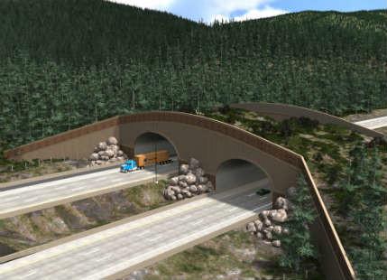 animal bridges feature