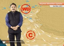 Weather Forecast for March 2: Due to spells of rains in Punjab, wheat production may drop
