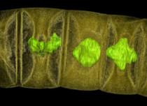 Old Algae Fossils