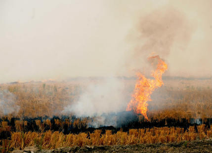 Punjab Fodder burning
