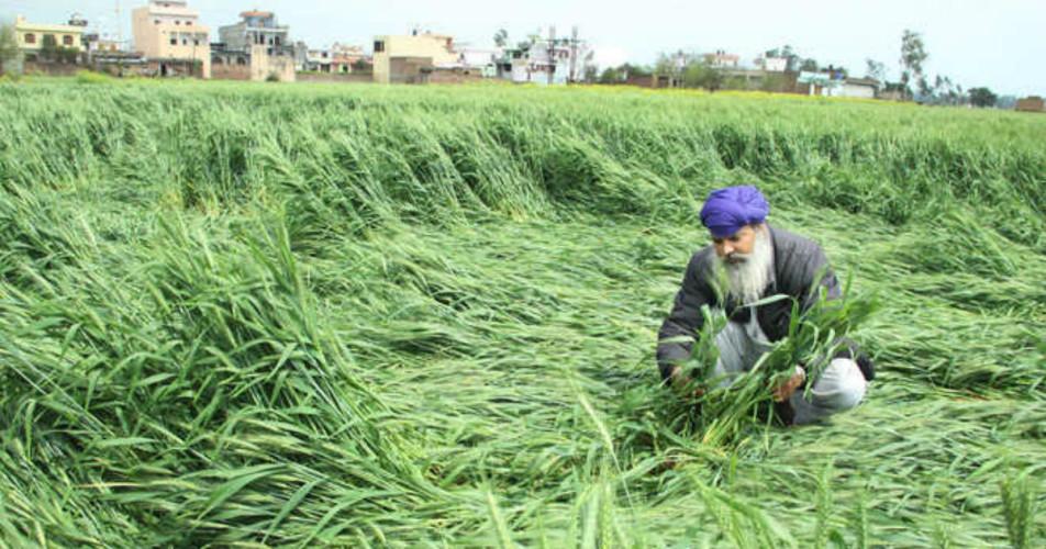 Punjab and Haryana crop damage