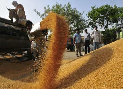 Wheat import duty