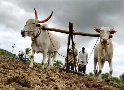 Farmers income in india
