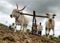 Food grain productinon in India