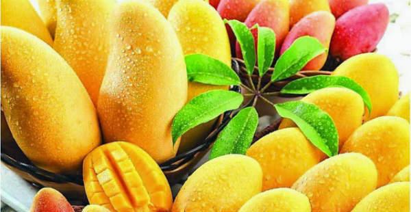 Indian Mango export