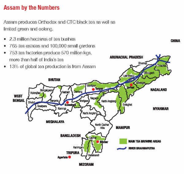Tea Industry of Assam 2_NElive