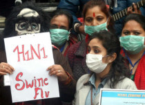 swine-flu feature