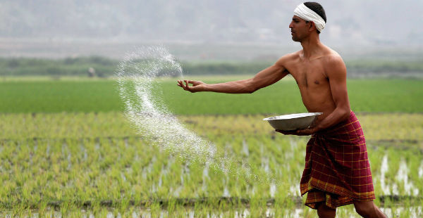 Paddy production in India_IGC