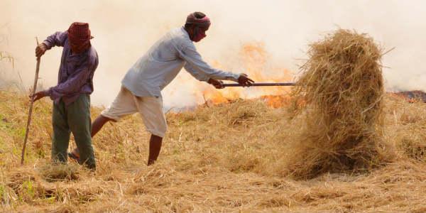 crop burning post